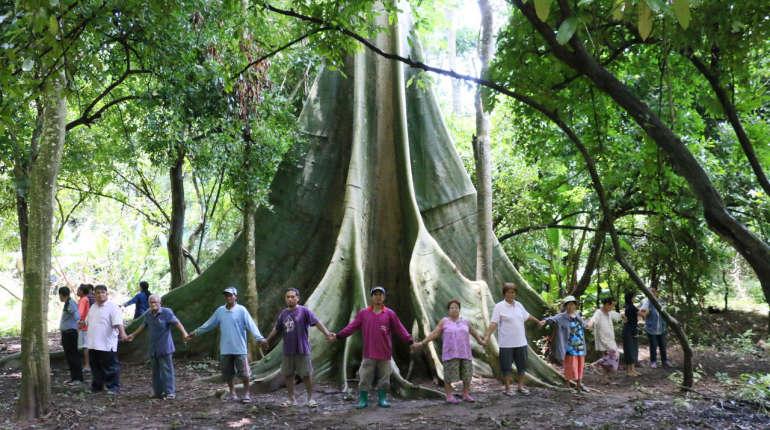 พบต้นสะพุงอายุร่วม 200 ปีขนาด 40 คนโอบ ตั้งตระหง่านกลางป่าที่ จ.เลย
